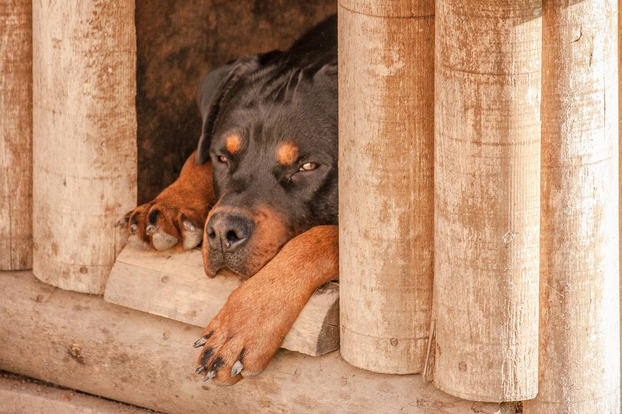 Jak zrobić budę dla psa - praktyczny poradnik!